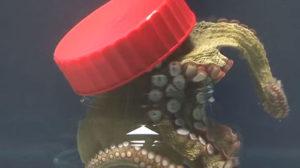 Een octopus ontsnapt uit een glazen pot met schroefdop - van binnenuit